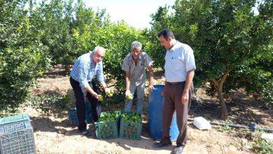 Photo of الزراعة : جهود كبيرة لمتابعة مزارع الحمضيات والفواكة في المحافظات