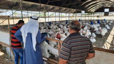 Photo of زراعة رفح تنفذ جولة إرشادية على مزارع الدجاج اللاحم والحبش