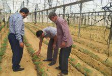 Photo of زراعة خان يونس تتفقد مزارعي الدفيئات الزراعية في منطقة السطر الغربي